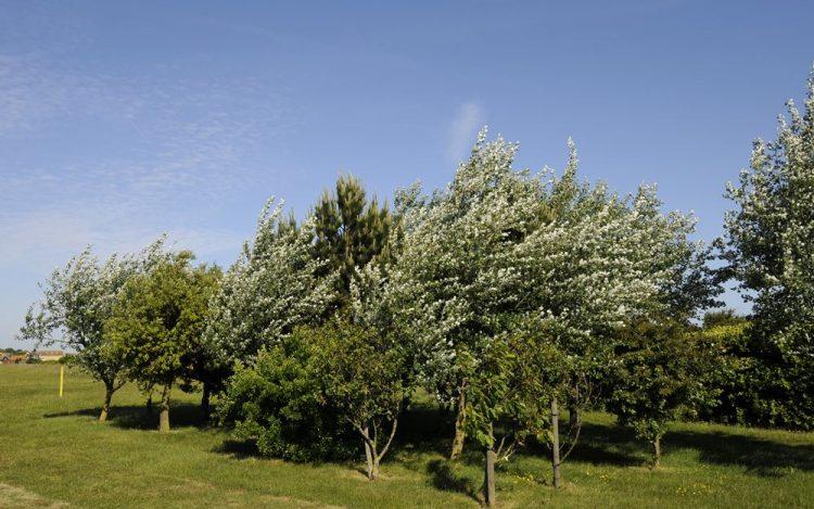 WBGC - 10TH HOLE - TREES BESIDE FAIRWAY
