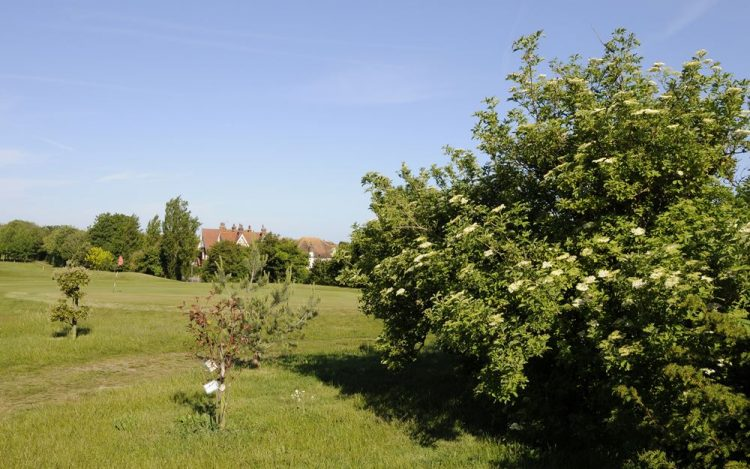 WBGC - 2ND HOLE - TREES AND BUSH BESIDE TEE