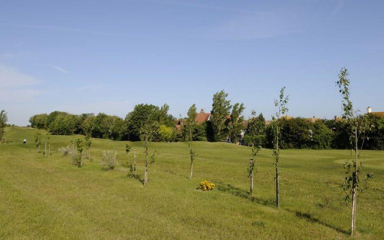 WBGC - 2ND HOLE - VIEW OF TREE PLANTATION BESIDE FAIRWAY